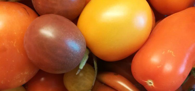 Tomatenvielfalt in der Mobilen Saatgutbibliothek