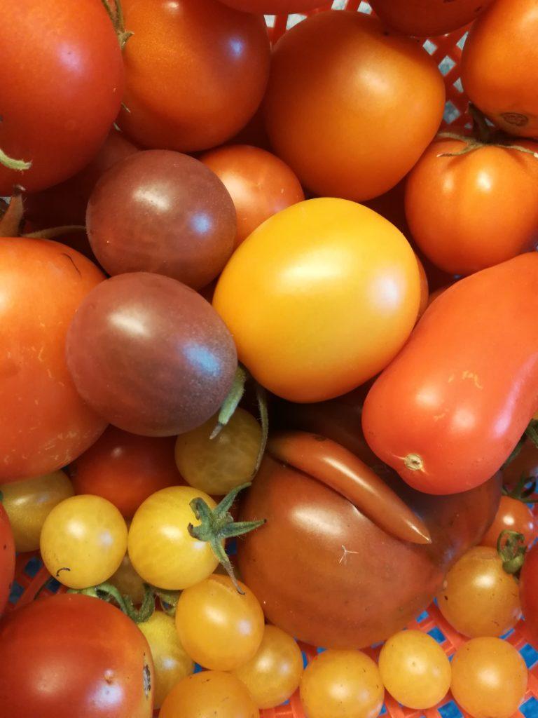 viele kleine Tomaten