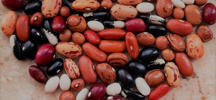 Bohnenvielfalt in der Mobilen Saatgutbibliothek